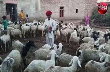 VIDEO : महिलाओं ने की गोवर्धन पूजा, ग्रामीणों ने थाली बजाकर पशुओं को दौड़ाया