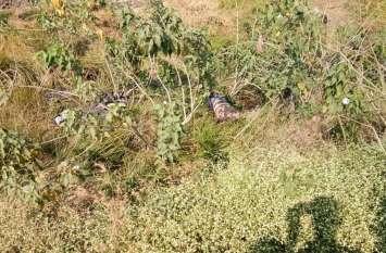 रामपुर के लापता युवक का झाडिय़ों में मिला शव