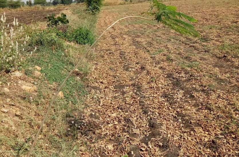दिखाया रुझाान, खेतों की मेड़ पर लगाए पौधे