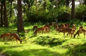 बारनवापारा के वन्यप्राणियों को नहीं संभाल पा रहा वन विभाग