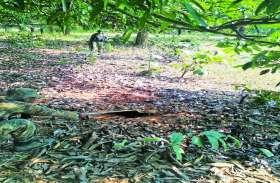 माओवादियों ने जंगल में बिछाया था मौत का जाल, जवानों ने किया विफल