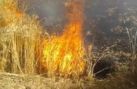 खेत में लगी आग, फसल जलकर राख