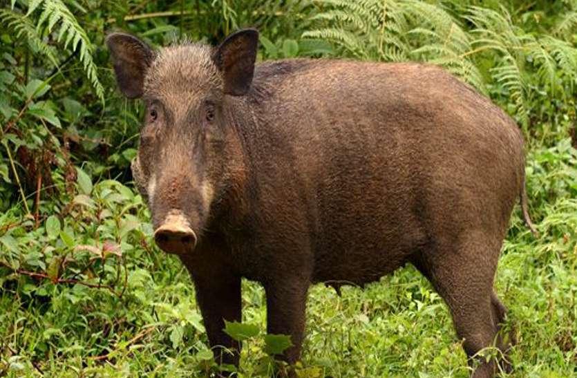 जंगली शूकर का शिकार करने खेत में बिछाया बिजली का तार चपेट में आया ग्रामीण,  हो गई बड़ी अनहोनी