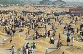 जश्न...बूंदी की धानमंडी से आई ये खबर, झूमने लगे किसान और व्यापारी, रात तक समेटना हुआ मुश्किल