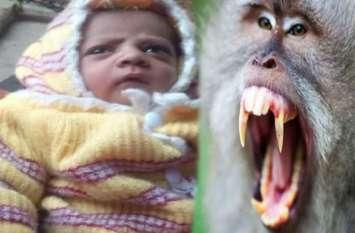 मां की गोद से 12 दिन के मासूम को छीन ले गया बंदर, इसके बाद बच्चे के साथ जो किया, जानकर दहल जाएगा दिल