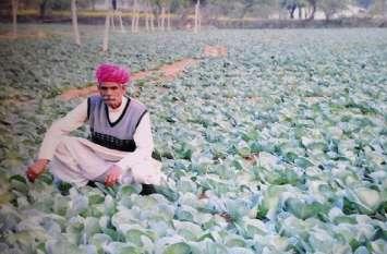 इस किसान ने उपजाई ऐसी गोभी, अब्दुल कलाम से लेकर प्रणव मुखर्जी चख चुके हैं स्वाद