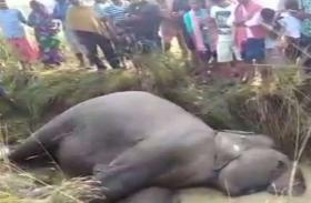 मयूरभंज में करंट लगने से एक हाथी की मौत