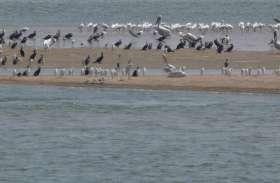 इस सेंचुरी की शोभा बढ़ा रहे हैं यहां आए 300 से अधिक दुर्लभ प्रजाति के प्रवासी पक्षी