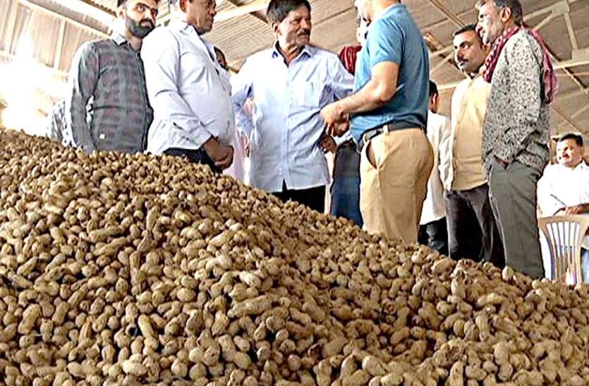 पहले दिन 2820 किसानों से 39 हजार क्विंटल मूंगफली खरीदी