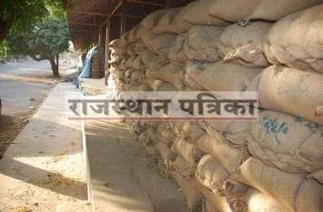 PICS : मूंग की बम्पर फसल खिले किसानों के चेहरे सरकारी खरीद भी ज्यादा