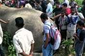 VIDEO: असम में दर्दनाक हादसा, बिजली की हाईवॉल्टेज तारों की चपेट में आए हाथी की मौत