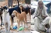 एक भिखारी की याद में कुत्तों ने किया कुछ ऐसा, लोग देने लगे दुहाई