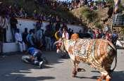 VIDEO : घसियार में गायों को रिझाया, श्रीनाथजी के अन्नकूट के दर्शन हुए