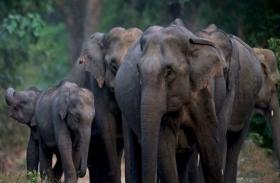 ओडिशा:शासन का फरमान...हाथी गुजरेंगे तो काट दी जाएगी बिजली