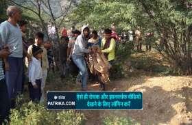VIDEO : पैंथर ने मचाया उत्पात, छह लोग जख्मी, फिर ग्रामीणों ने पीट-पीट कर मार डाला