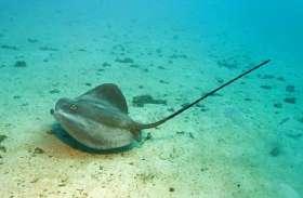 ऑस्ट्रेलिया में मछली के हमले में तैराक की मौत