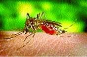 जीका वायरस के संक्रमण की जांच करने केंद्र से आया विशेषज्ञ दल