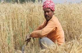 एक पखवारा बाद भी नहीं शुरू हो सकी धान खरीद, ठगा महसूस कर रहा है किसान
