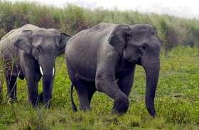 जंगली हाथी ने ली बालिका की जान