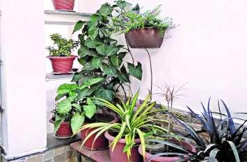 खूशबूदार पौधों की दुकानें बनीं लोगों के आकर्षण का केंद्र