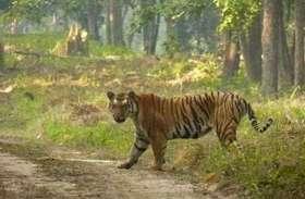 पीलीभीत में फिर बाघ का हमला, ग्रामीण युवक घायल