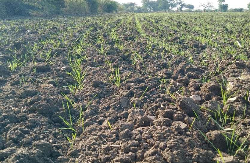 फसलों पर मौसम की मार, किसानों की बढ़ रही चिंता