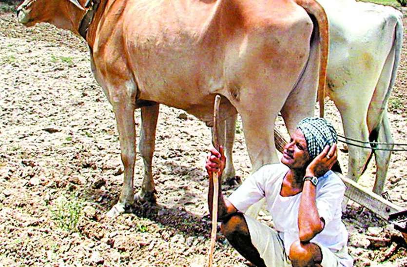 खेतों तक नहीं पहुंच रहा पानी, किसान चक्कर लगाने को विवश, नहीं मिल रहा संतोषप्रद जवाब...