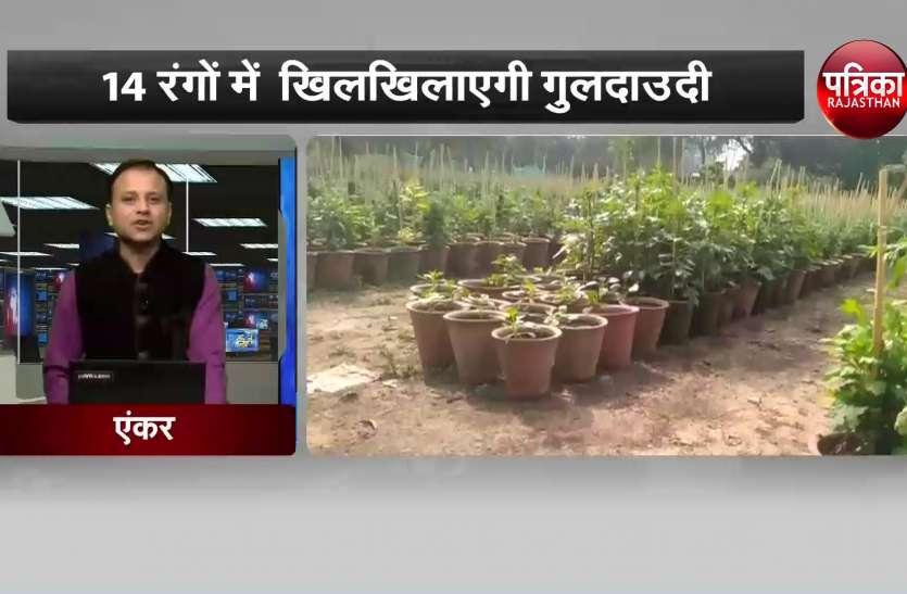 राजस्थान विश्वविद्यालय में गुलदाउदी प्रदर्शनी