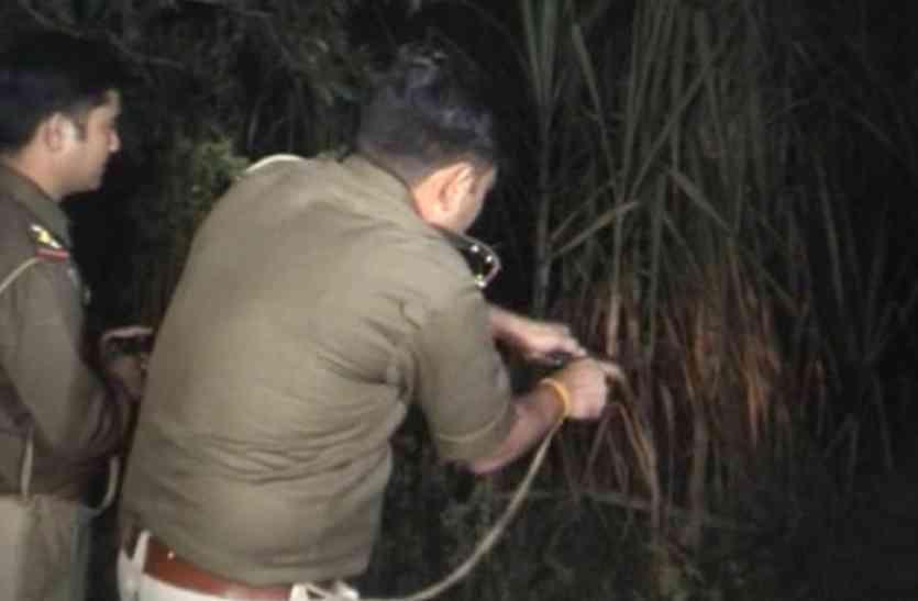 अवैध जंगलों की कटाई व बिजली गुल के मामलामें 3थाना प्रभारी व बिजली अधिकारी ने की सघन गश्त