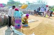 कांग्रेस के कर्जमाफी के वादे के बाद किसान नहीं बेच रहे धान, बोले- उम्मीद है सरकार बदलने से होगा बड़ा फायदा