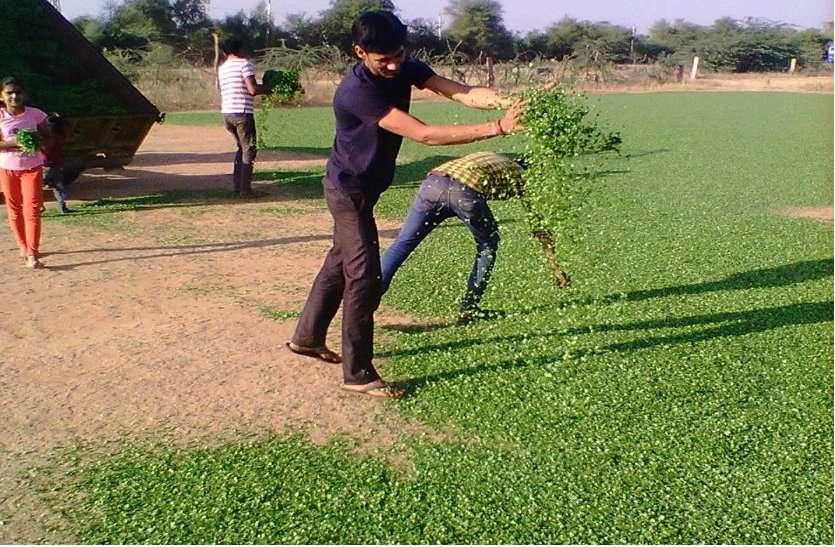 रूण क्षेत्र की मिट्टी संवार रही है पान मैथी