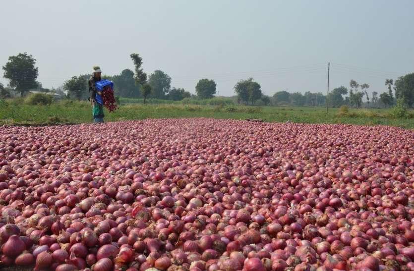 घटी कृषि जोत: प्याज की रोपाई जोरों पर, मजदूरी हुई महंगी