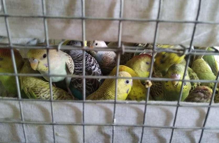 दिल्ली से लाया तोते, कबूतर व सफेद चूहे, दस्ते ने आरोपी को किया गिरफ्तार