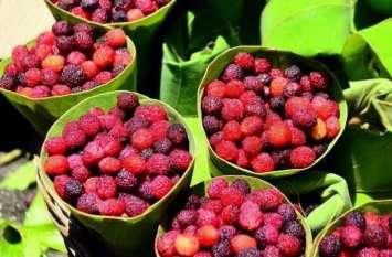 कैंसर जैसी जानलेवा बीमारी का रामबाण इलाज है ये पहाड़ी फल, ऐसे करें सेवन