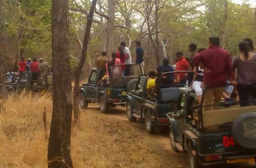 अकोला बफर जोन में पर्यटन को बढ़ावा देने भोपाल से दिल्ली तक हड़कंप