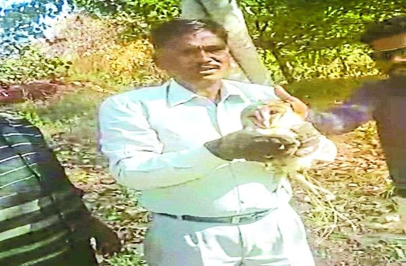 कपड़ा गोदाम में मिले दुर्लभ प्रजाति का उल्लू