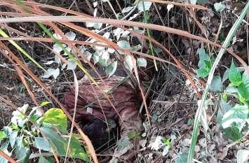 बेगम के चलते अधेड़ की कर दी गई हत्या