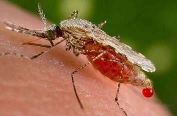 बिना एलाइजा जांच ही बुखार के मरीजों को बता रहे डेंगू, सैम्पल नहीं भेजे जाते जिला अस्पताल