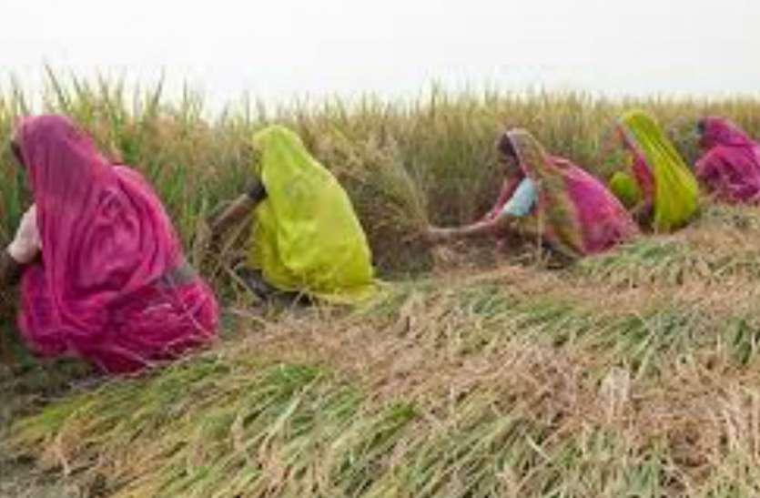 वीडियोः बिना रासायनिक खाद के इस तरह तैयार हो रही बहुफसलीय खेती, जिले में बनाया गया पहला माॅडल