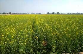 इंदिरा गाँधी  नहर परियोजना के किसान चिंतित।