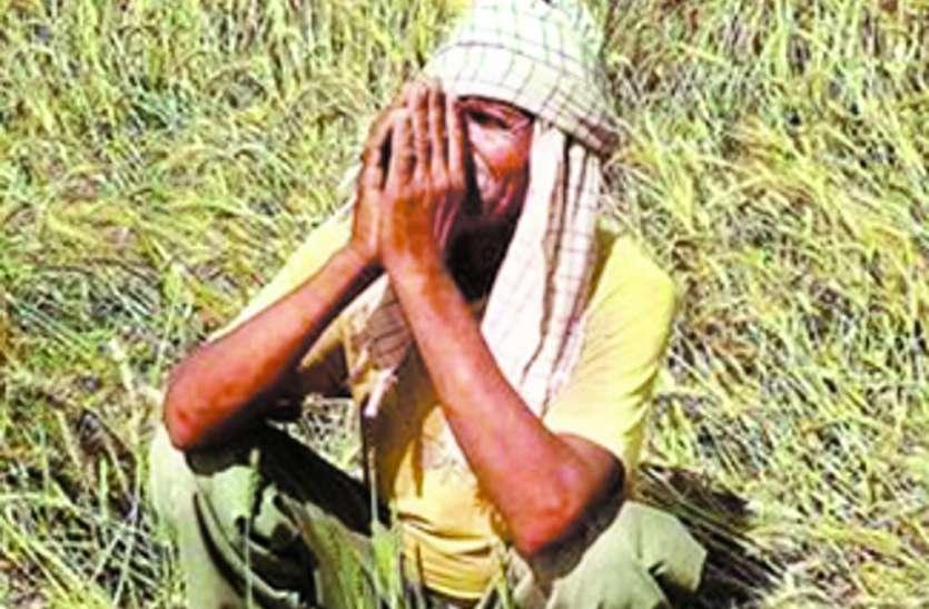 कांग्रेस की कर्जमाफी की घोषणा के इंतजार में किसान