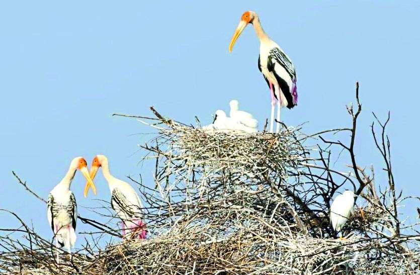 चावंडिया पहुुंचने लगे प्रवासी पक्षी