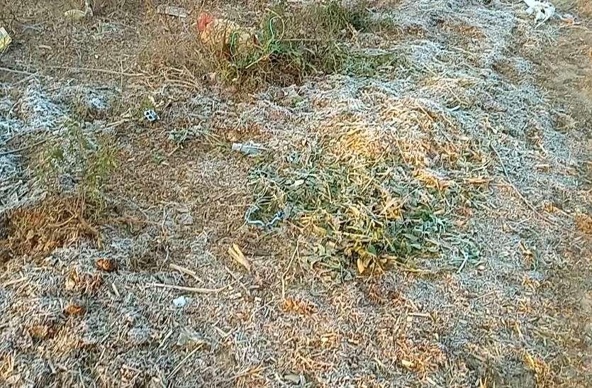 राजस्थान में किसानों की कर्जमाफी से पहले ही पाला पड़ने के कारण फसलें नष्ट, दोहरी मार से परेशान धरतीपुत्र