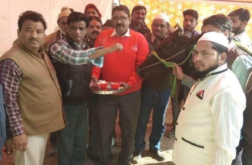 यूपी के सहारनपुर में हिंदू और मुस्लिम व्यापारियों ने गाय को तिलक लगाकर लिया गौ-रक्षा का संकल्प