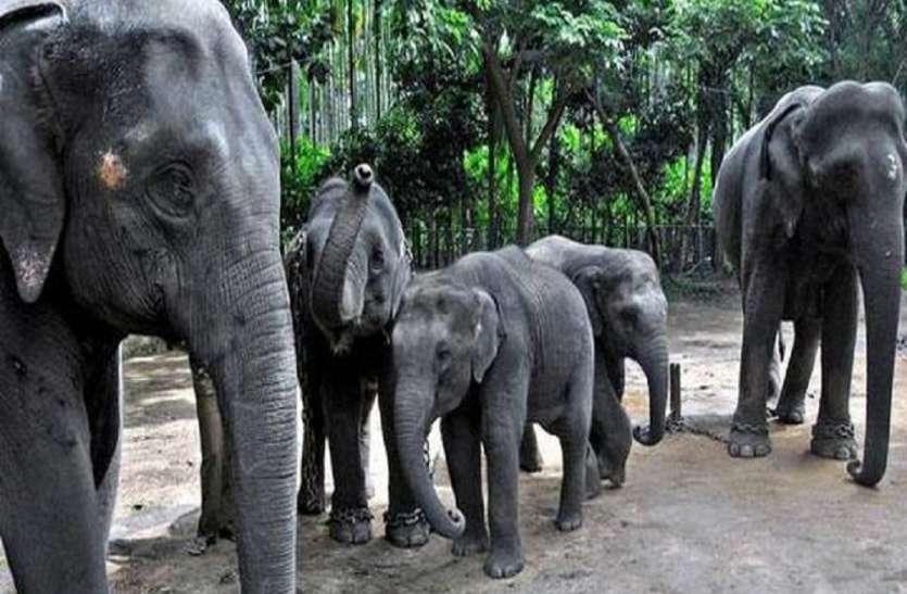 दुधवा नेशनल पार्क के हाथियों से लोगों में दहशत, डर से ग्रामीणों ने खेतों में काम करना किया बंद