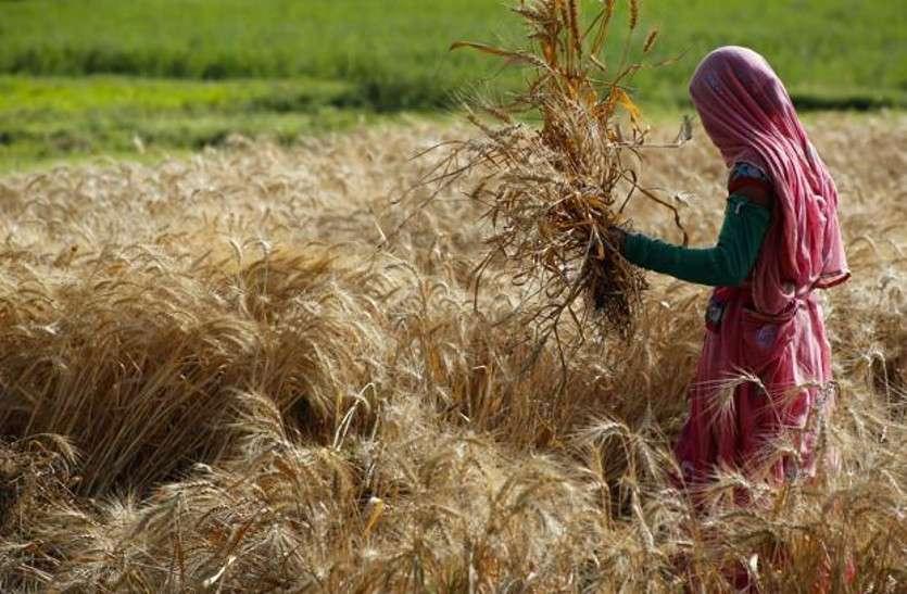 तीन श्रेणियों में हो सकती है किसानों की कर्जमाफी, सहकारिता विभाग जुटा मशक्कत में, सीएम कर सकते हैं ऐलान!