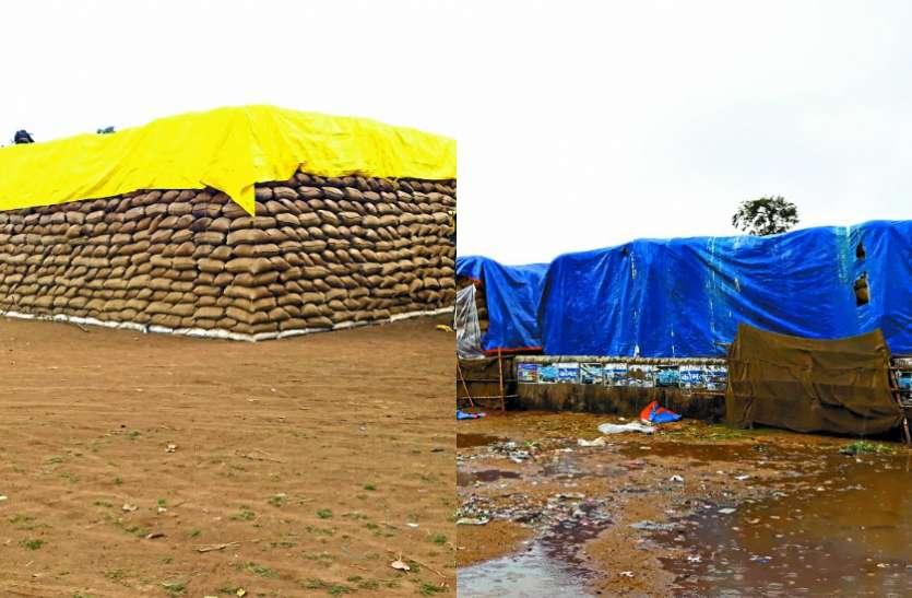 फेथाई के असर से हुई बारिश से किसानों को नुकसान, खेतों में तैयार फसल चौपट, केंद्रों में भीगा करोड़ों का धान