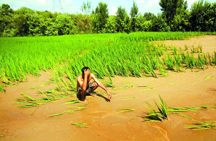मप्र, छग में ऋण माफी के बाद राजस्थान के किसानों को इंतजार