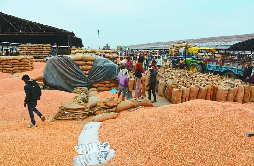 दक्षिण भारत की डिमांड से मक्का भाव 17 सौ पार