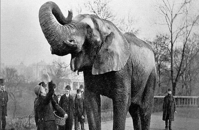 एक मासूम हाथी को सबके सामने लटका दिया था फांसी के फंदे पर, पीछे की कहानी कर देगी बेचैन